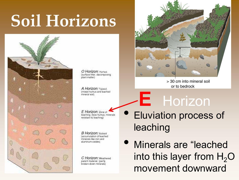 E Horizon Soil Horizons Eluviation process of leaching