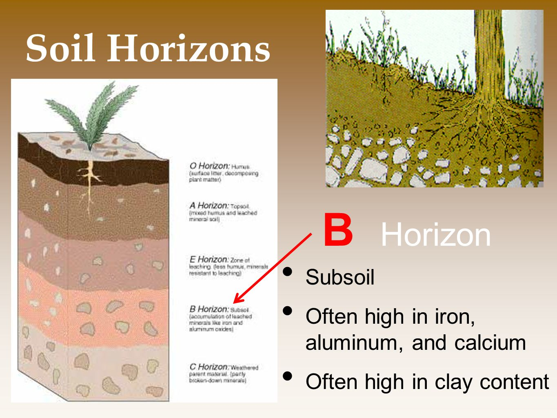 B Horizon Soil Horizons Subsoil