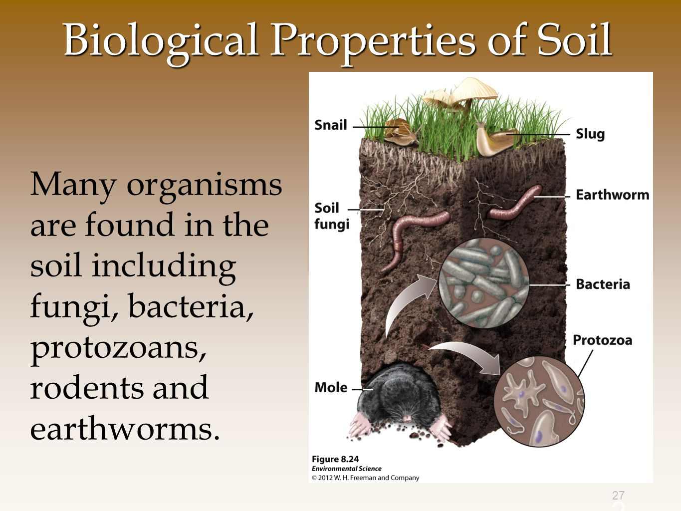 Chapter 10 land public and private ppt video online for Soil organisms
