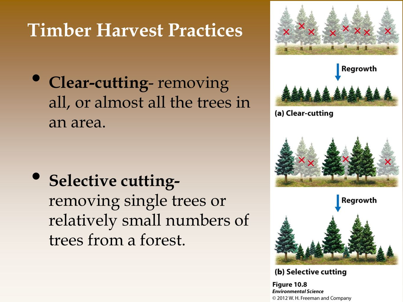 Timber Harvest Practices