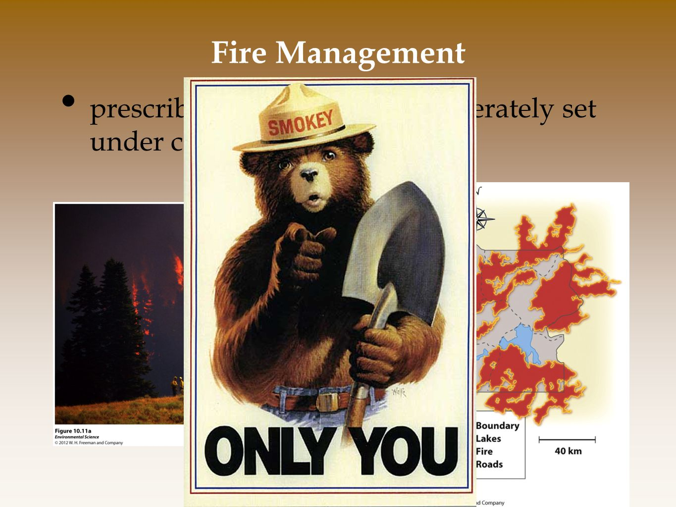 Fire Management prescribed burns- a fire is deliberately set under controlled conditions.