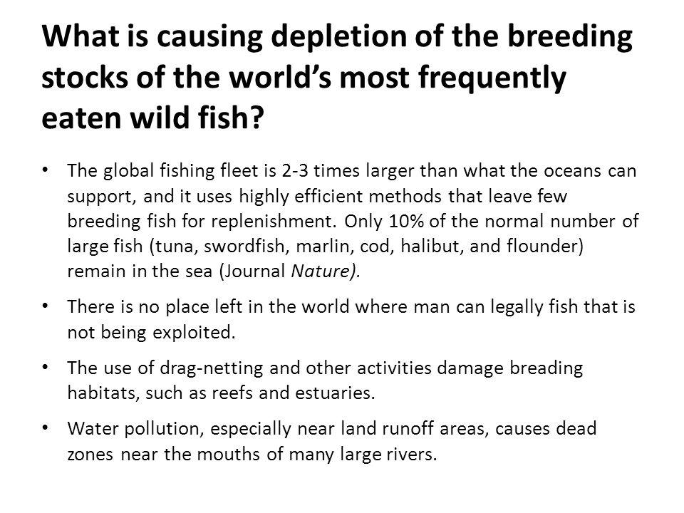 What is causing depletion of the breeding stocks of the world's most frequently eaten wild fish