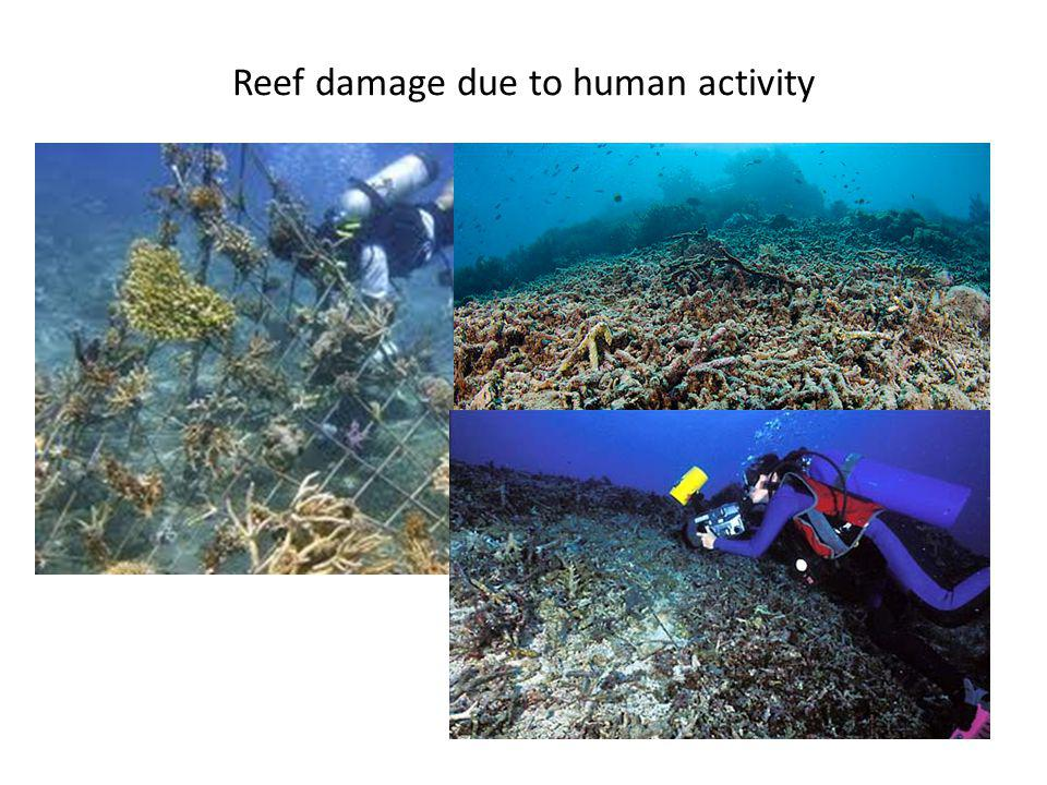 Reef damage due to human activity