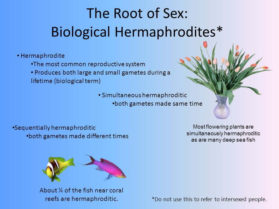 The Root of Sex: Biological Hermaphrodites*