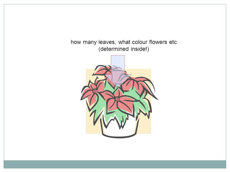how many leaves, what colour flowers etc