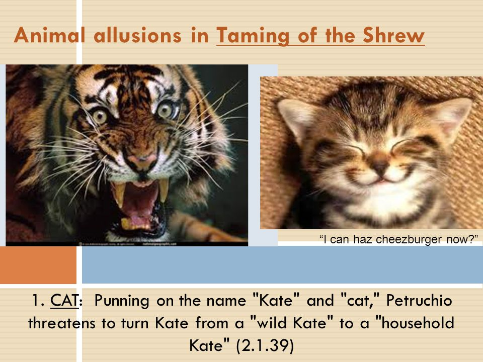 Animal allusions in Taming of the Shrew