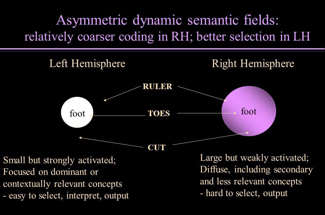 Asymmetric dynamic semantic fields: relatively coarser coding in RH; better selection in LH