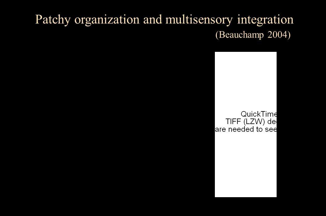 Patchy organization and multisensory integration
