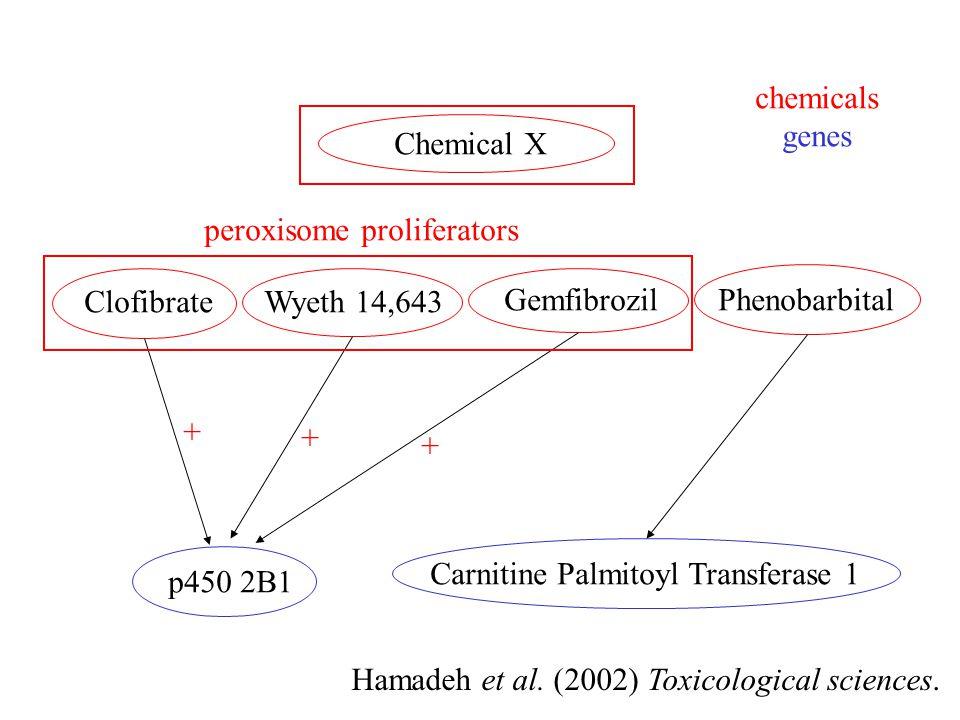 Hamadeh et al. (2002) Toxicological sciences.