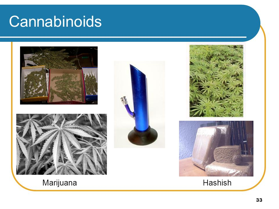 Cannabinoids Marijuana Hashish
