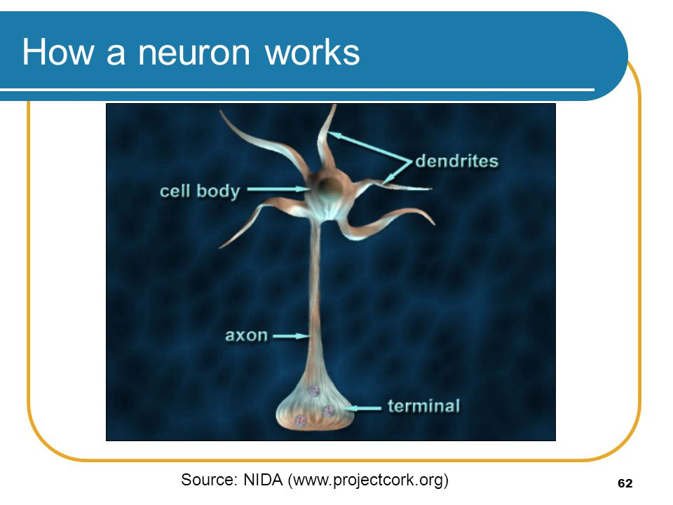 How a neuron works Source: NIDA (www.projectcork.org)