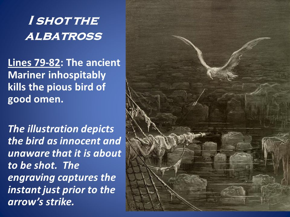I shot the albatross Lines 79-82: The ancient Mariner inhospitably kills the pious bird of good omen.