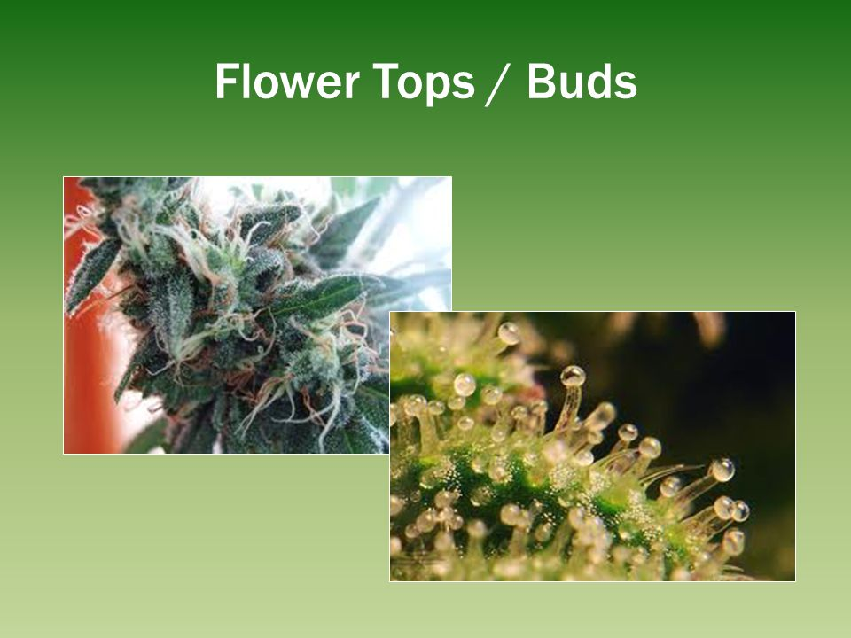 Flower Tops / Buds The flower tops are where cannabinoids are concentrated.