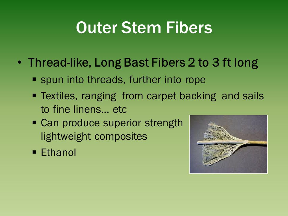 Outer Stem Fibers Thread-like, Long Bast Fibers 2 to 3 ft long