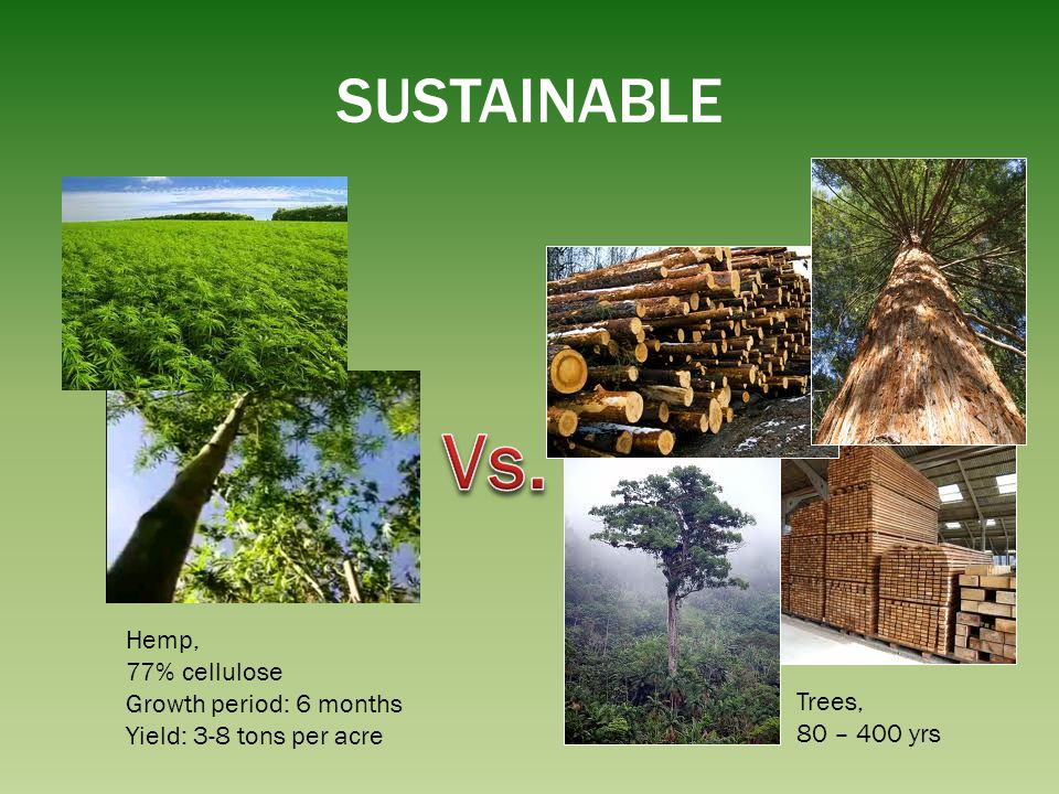 Vs. SUSTAINABLE Hemp, 77% cellulose Growth period: 6 months