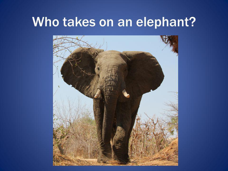 Who takes on an elephant