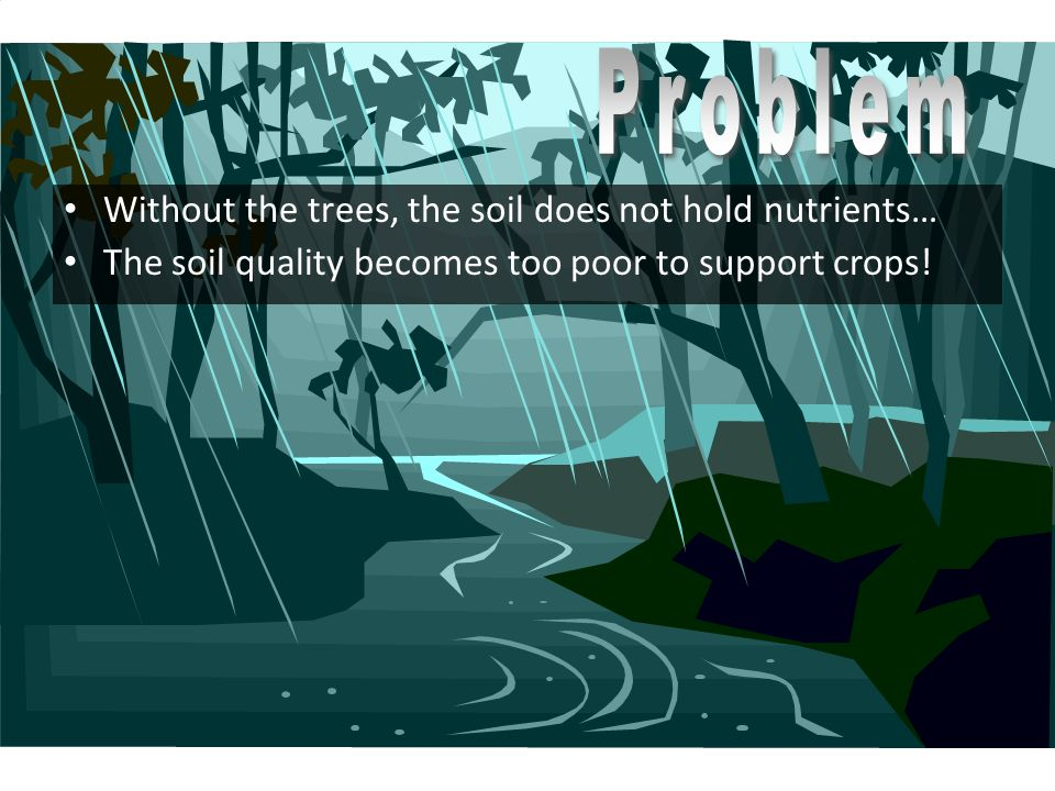 Problem Without the trees, the soil does not hold nutrients…