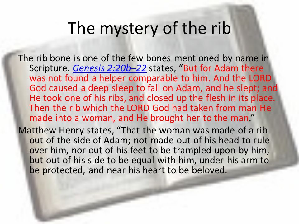 The mystery of the rib