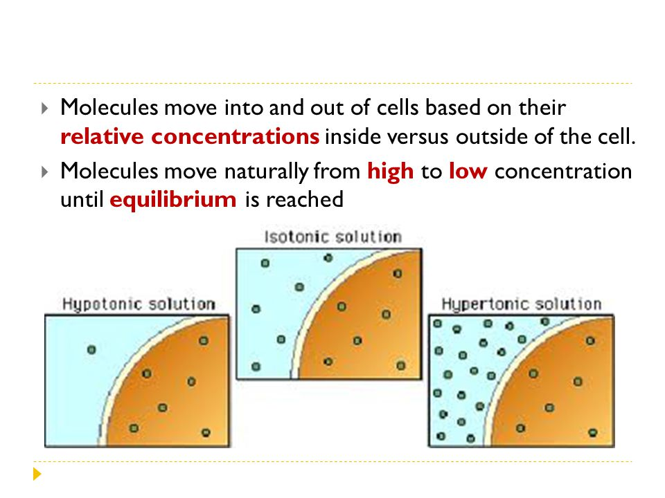Molecules move into and out of cells based on their relative concentrations inside versus outside of the cell.