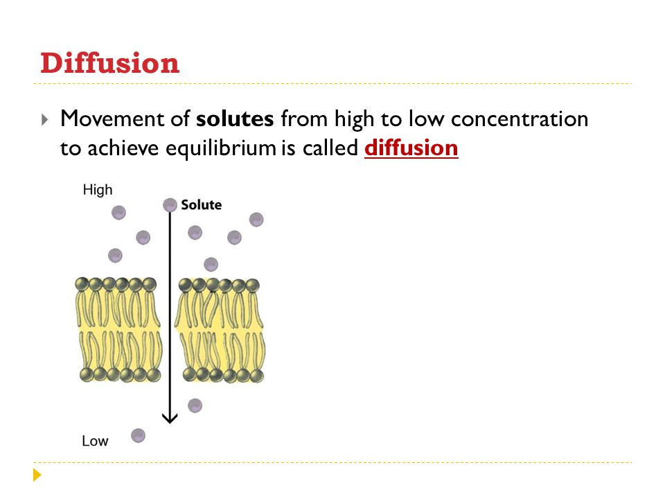 Diffusion Movement of solutes from high to low concentration to achieve equilibrium is called diffusion.
