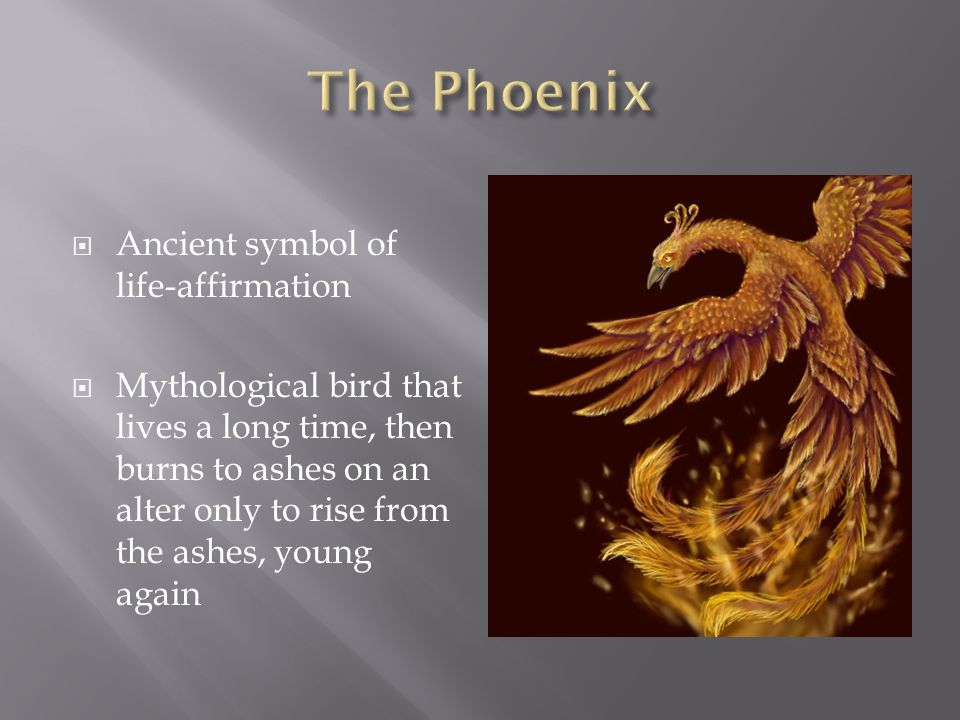 The Phoenix Ancient symbol of life-affirmation