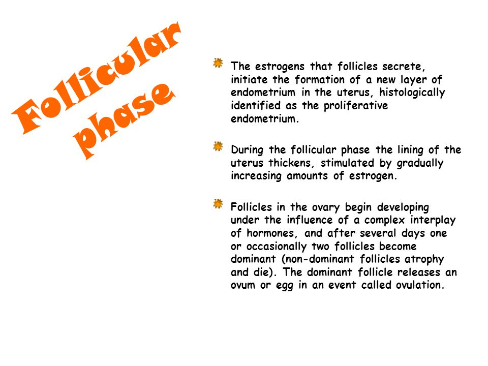 Follicular phase.
