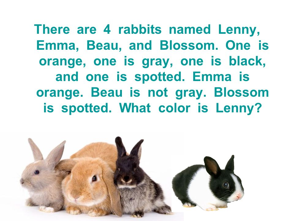 There are 4 rabbits named Lenny, Emma, Beau, and Blossom