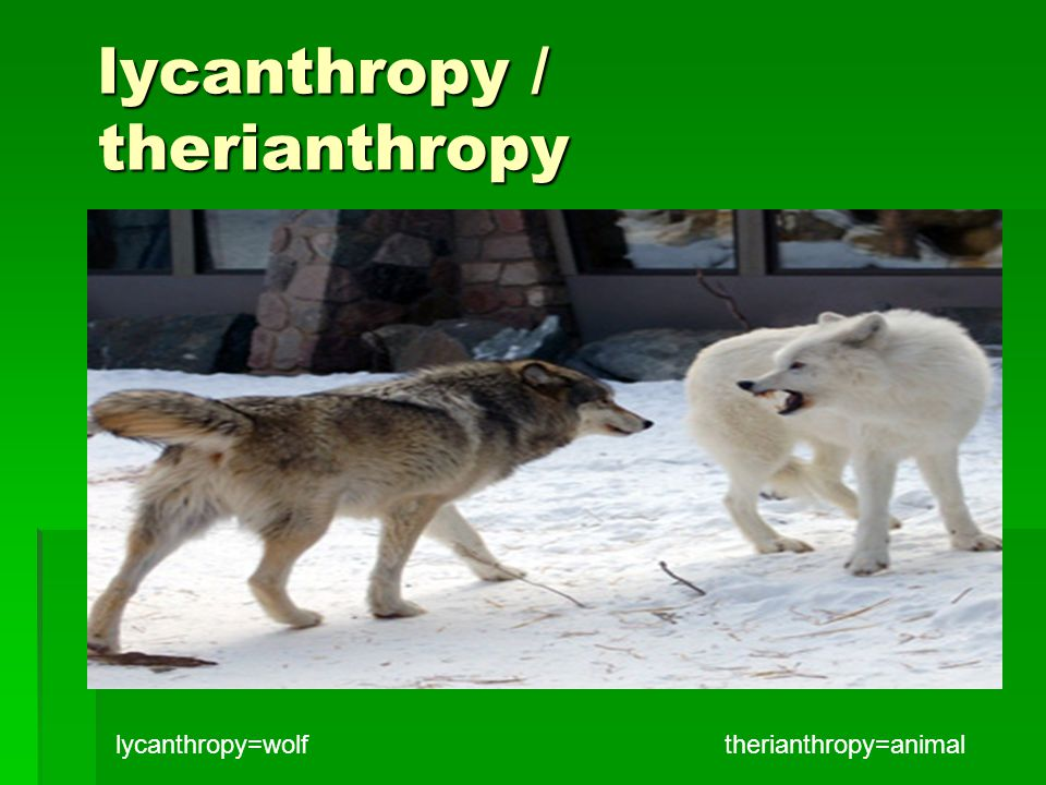 lycanthropy / therianthropy