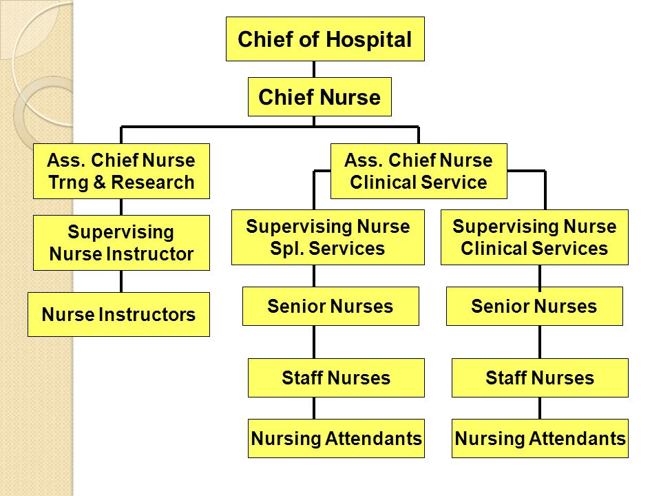 Chief of Hospital Chief Nurse