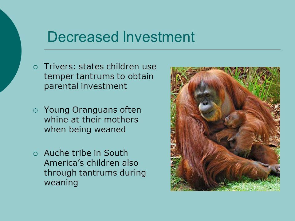 Decreased Investment Trivers: states children use temper tantrums to obtain parental investment.