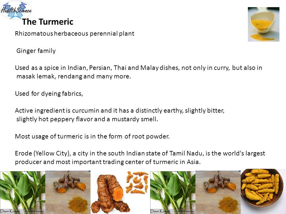 The Turmeric Rhizomatous herbaceous perennial plant Ginger family