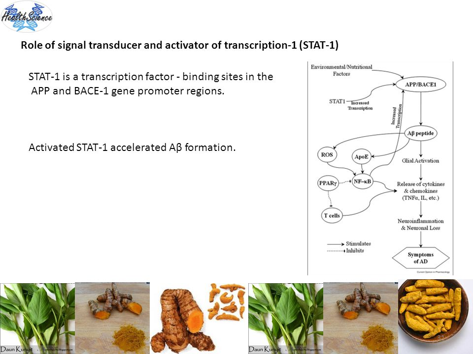 Role of signal transducer and activator of transcription-1 (STAT-1)