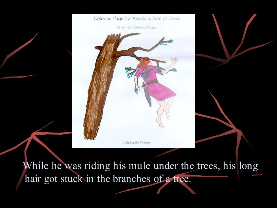 While he was riding his mule under the trees, his long hair got stuck in the branches of a tree.