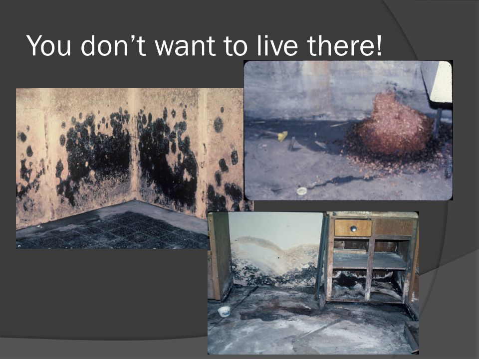 You don't want to live there!