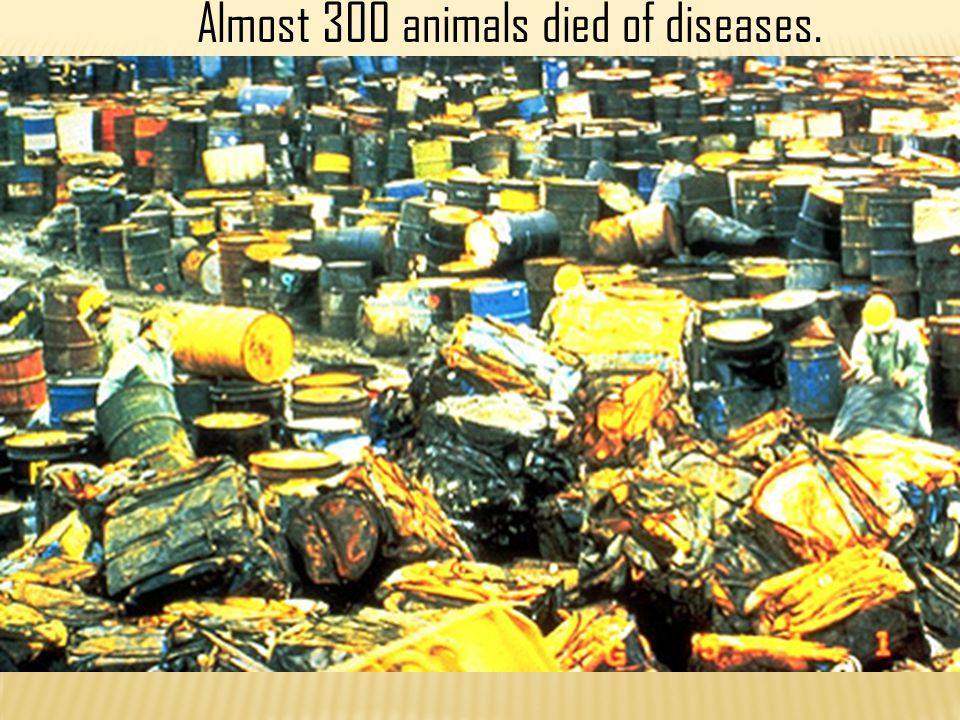 Almost 300 animals died of diseases.