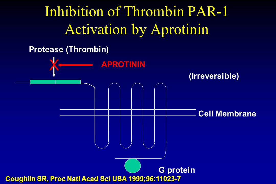 Inhibition of Thrombin PAR-1 Activation by Aprotinin