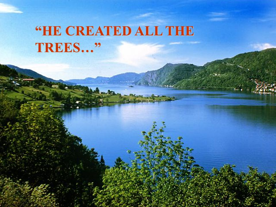 HE CREATED ALL THE TREES…