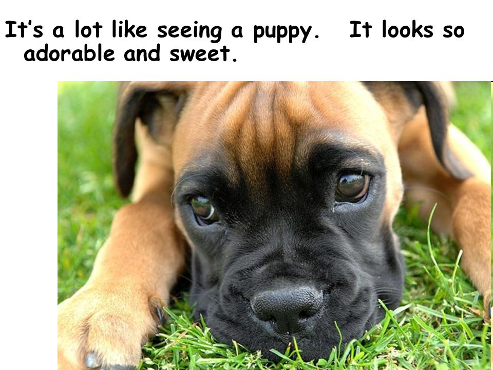 It's a lot like seeing a puppy. It looks so adorable and sweet.