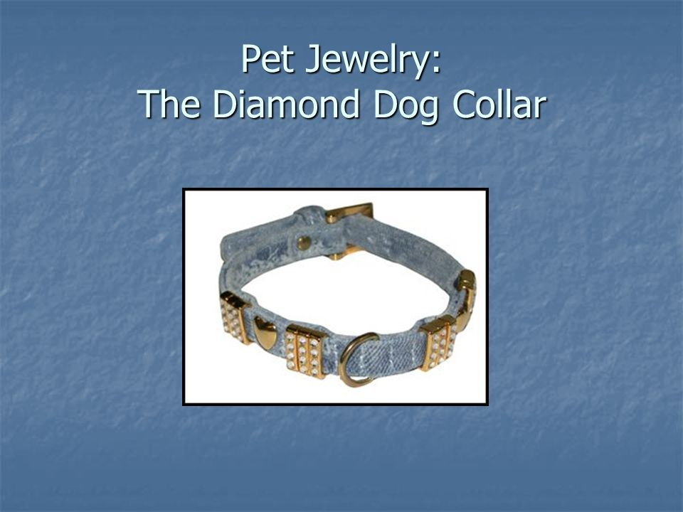 Pet Jewelry: The Diamond Dog Collar