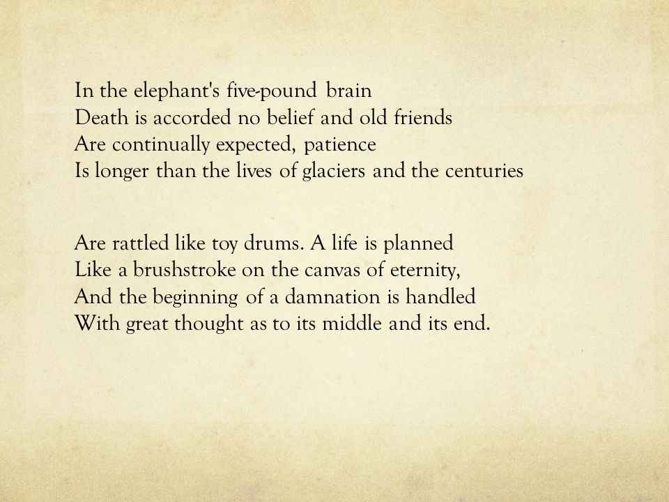 In the elephant s five-pound brain Death is accorded no belief and old friends Are continually expected, patience Is longer than the lives of glaciers and the centuries Are rattled like toy drums.