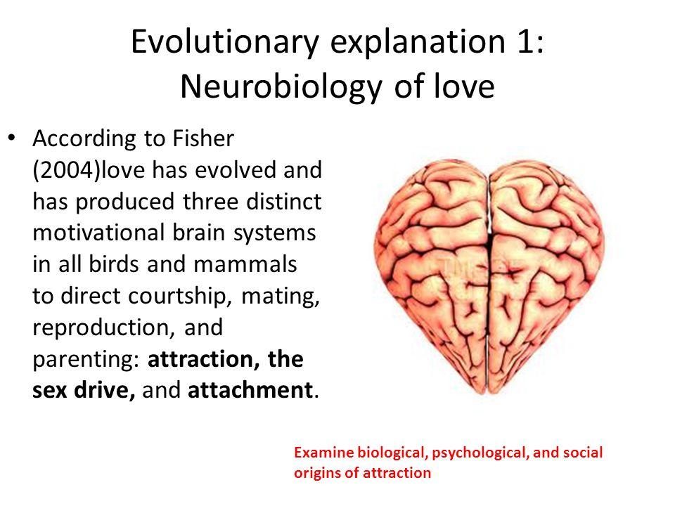 Evolutionary explanation 1: Neurobiology of love