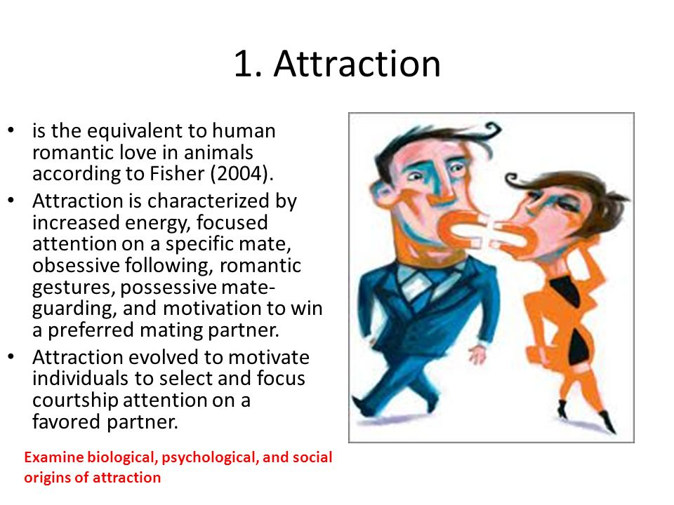 1. Attraction is the equivalent to human romantic love in animals according to Fisher (2004).