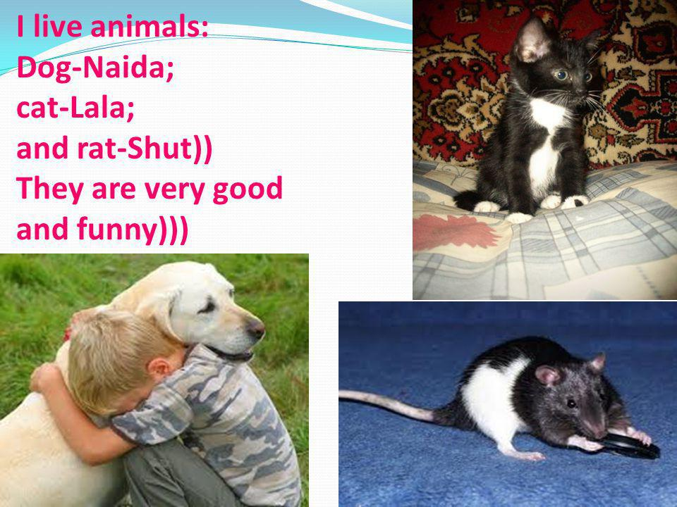 I live animals: Dog-Naida; cat-Lala; and rat-Shut)) They are very good and funny)))
