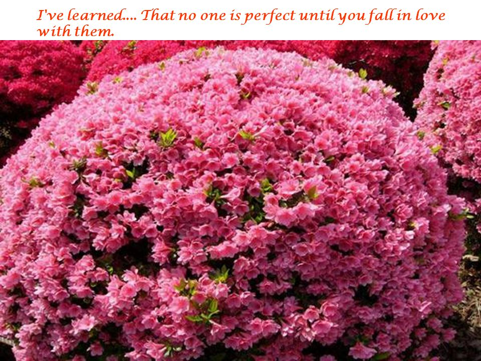 I ve learned.... That no one is perfect until you fall in love with them.