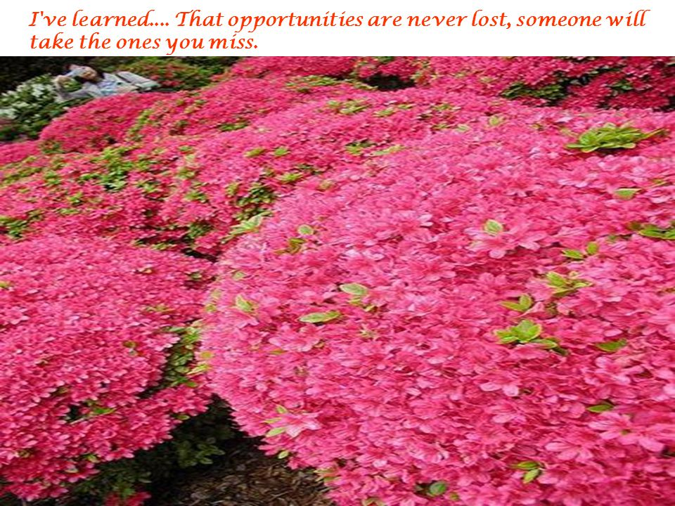 I ve learned.... That opportunities are never lost, someone will take the ones you miss.