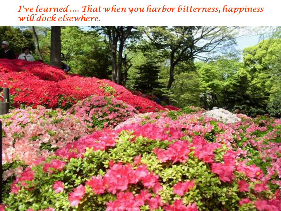 I ve learned .... That when you harbor bitterness, happiness will dock elsewhere.
