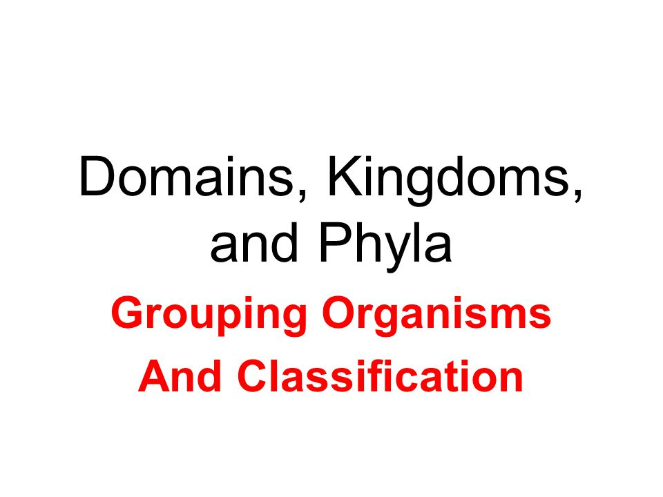 Domains, Kingdoms, and Phyla