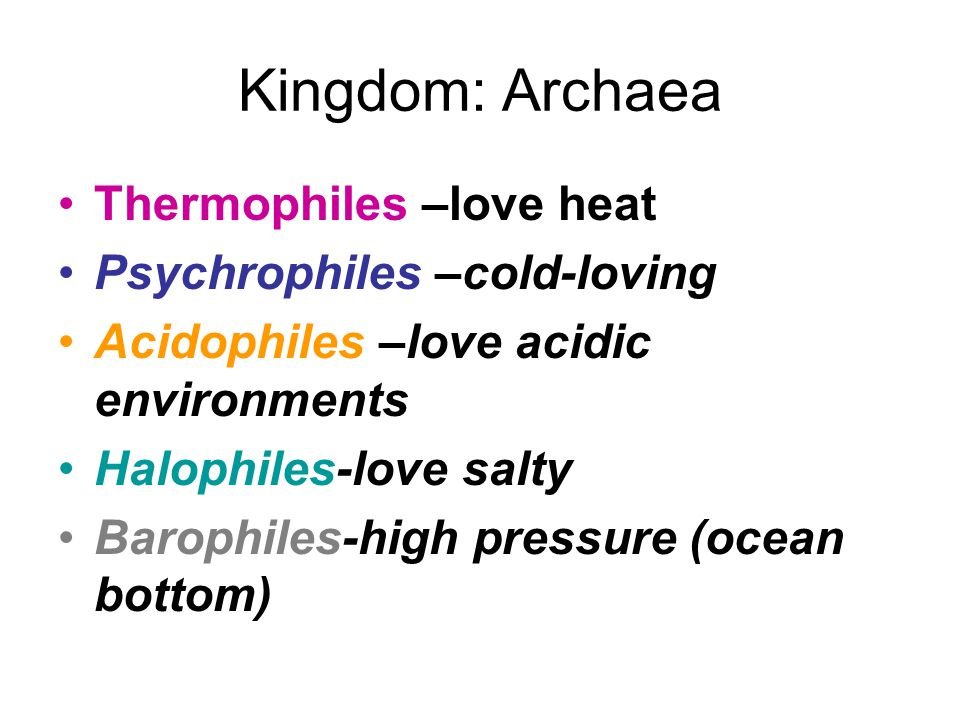Kingdom: Archaea Thermophiles –love heat Psychrophiles –cold-loving