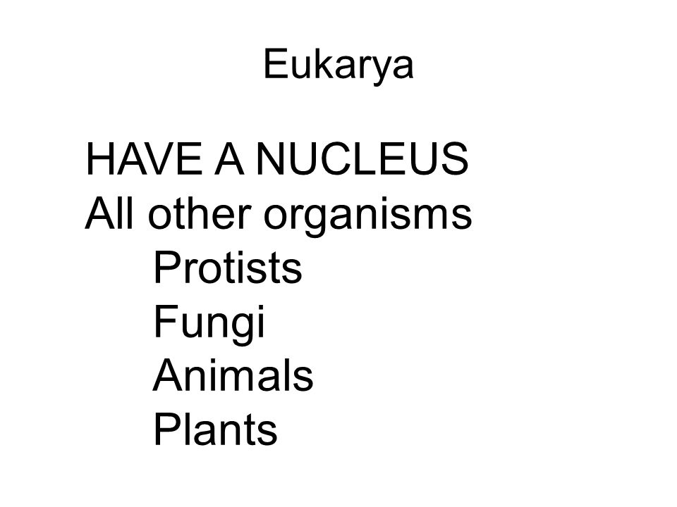 HAVE A NUCLEUS All other organisms Protists Fungi Animals Plants