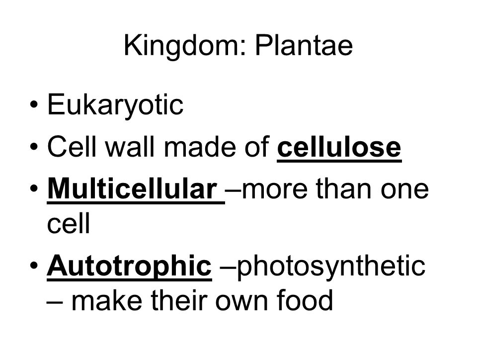 Kingdom: Plantae Eukaryotic. Cell wall made of cellulose.